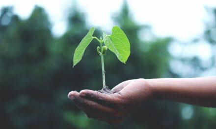 Studiu: Marketerii au întârzieri în ceea ce privește sustenabilitatea la nivel corporativ